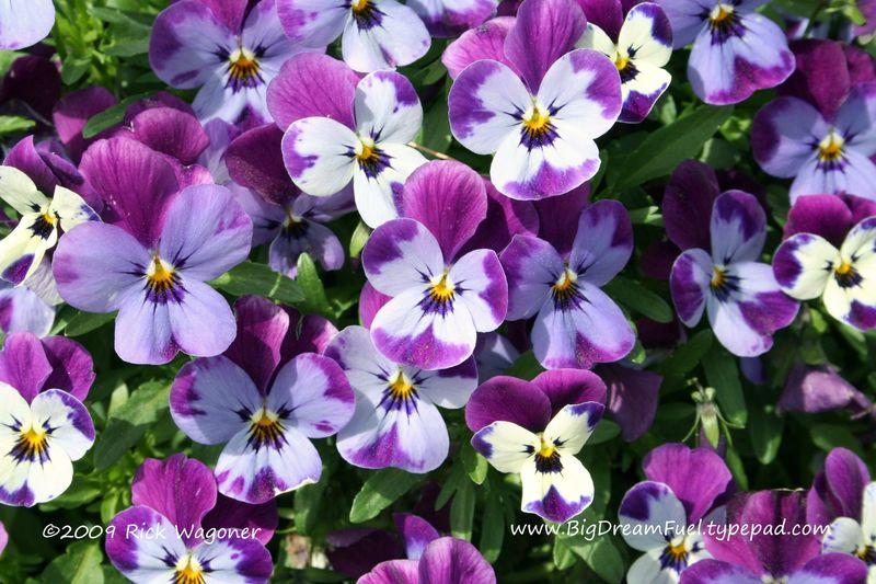 FlowersApril09 003